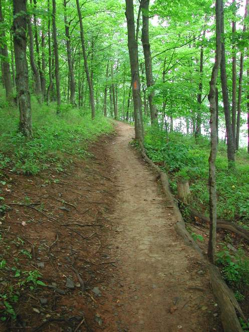 Nice single track section along the Lakeside Trail on the south/eastern side of Lake Habeeb.